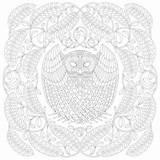 Millie Marotta Tawny Owl Birds Pavilion Coloring sketch template