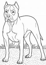 Boxer Coloring Dog Pages Backyard Colouring Guarding Guard Boxers Breed Police Trending Days Last Tocolor Button Using Sketch Template sketch template