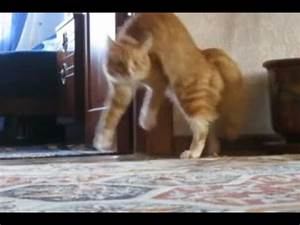Cats on two legs compilation - YouTube
