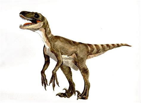terms and conditions velociraptor facts feathers dinosaurs pictures and facts