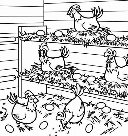 Chicken Coloring Coop Pages Egg Lays Drawing