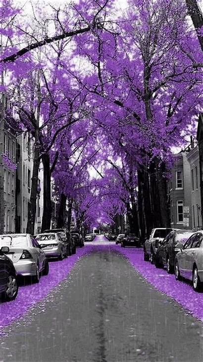 Purple Trees Nature Splash Rain Mobile9