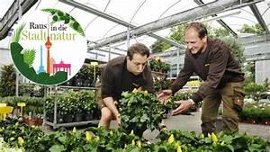Pflanzen Holländer Berlin : von bienen blumen und b umchen f r euro berlin ~ Watch28wear.com Haus und Dekorationen