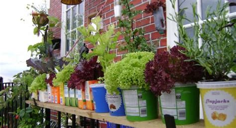 Windowsill Vegetable Garden by How To Start A Vegetable Garden That Suits Your Lifestyle