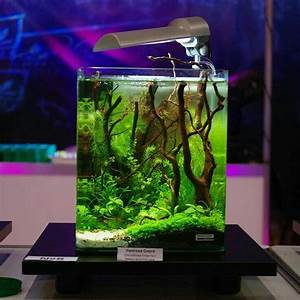 Petit Aquarium Design : aquascape life in transparent tank aquarium marine ~ Melissatoandfro.com Idées de Décoration