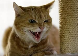 Katzen Fernhalten Von Möbeln : schmuseeinheit schl gt fressnapf katzen lieben menschen ~ Michelbontemps.com Haus und Dekorationen
