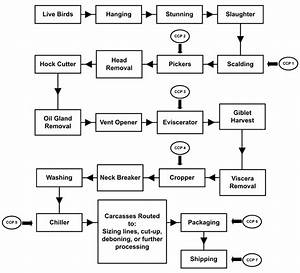 Example Of Poultry Processing Haccp Flow Diagram
