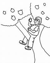 Tree Coloring Boy Climbing Apple Eating Kidsplaycolor Pages 759px 54kb Boys sketch template