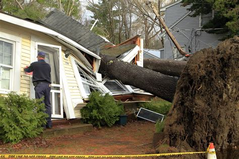 storms topple  england trees  raise fears