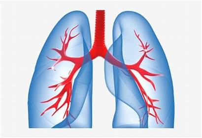 Lungs Background Transparent Clipart Pngkit
