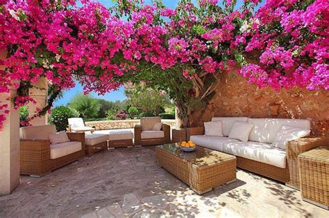 bougainvillea  pergola google search yard