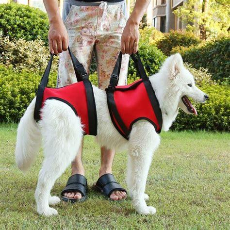 Hunde Gehhilfe Hinten