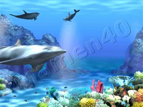 Living 3d Dolphins Animated Wallpaper - miami dolphins live wallpaper wallpapersafari