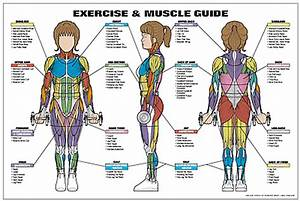 Exercise And Muscle Guide  Female  Fitness Chart  Co
