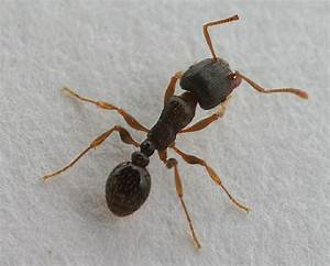 Pavement Ants Love Fritos! And Have Big Nests!   The ...