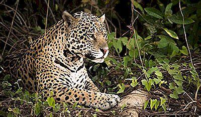 de mest farlige dyr  amazonas regnskov