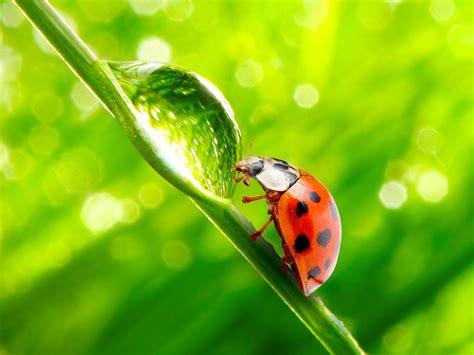 ladybug on leaf green blurred lights hd wallpaper hd