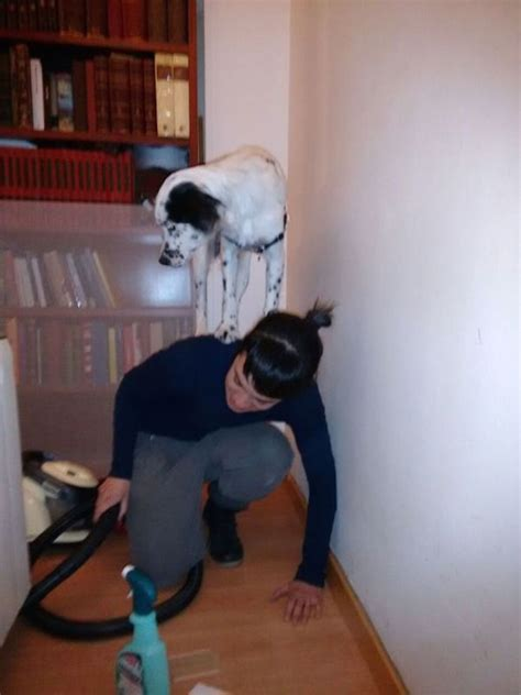 heres proof  scaredy dogs  funnier  scaredy cats