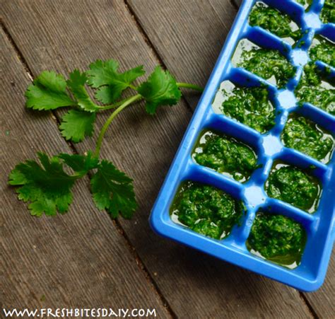 how to freeze cilantro freezing cilantro with an idea that might knock your socks off fresh bites daily