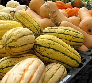 Move Over  Pumpkin  A Guide To Cooking Winter Squash