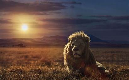 Lion King Wallpapers Galaxy