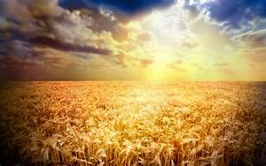 Wheat Field wallpaper - 756299