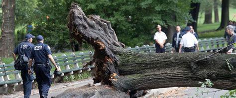 3 children injured after large elm tree uproots in central park