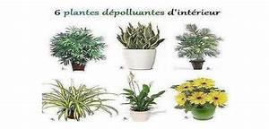 Marc De Café Plantes D Intérieur : les plantes d polluantes d 39 int rieur ~ Melissatoandfro.com Idées de Décoration
