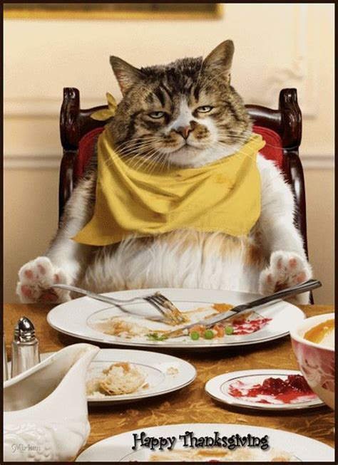 thanksgiving cat thanksgiving cat via flickr cats for nate pinterest