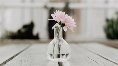wallpaper  flower pink vase glass