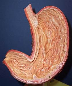 Digestive Pictures