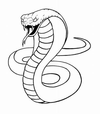 Snake Cobra Drawing Coloring King Kobra Schlange