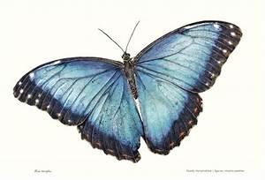 12 Fun Facts About Butterflies  U0026 Moths