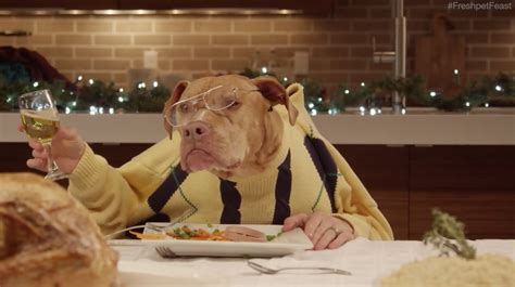 dog eating at table 13 dogs and a cat eat with human hands in freshpet s