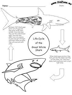 Shark Anatomy Diagram To Label  Ocean Life  Pinterest  Diagram, Science Fair And Worksheets