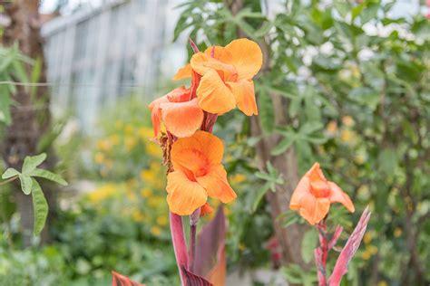 Botanischer Garten Erlangen Gewächshäuser öffnungszeiten by Botanischer Garten Erlangen Botanischer Garten