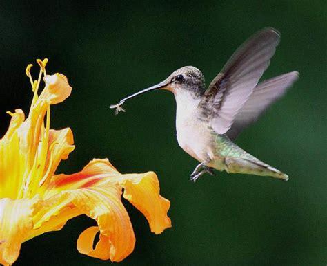 hummingbirds unit  mexico birds