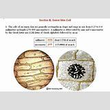 Human Cheek Epithelial Cells   432 x 286 jpeg 34kB