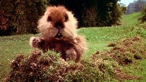 Difference Betw... Caddyshack Gopher