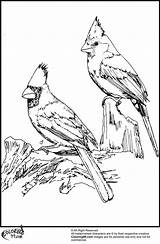 Cardinal Coloring Pages Birds Winter American Printable Cardinals Drawing Bird Drawings Adult Adults Sheets Northern Crafts Books Louisville Wood Getdrawings sketch template