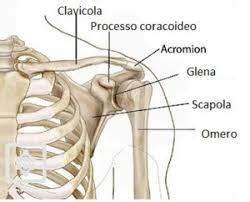 dolore gabbia toracica sinistra dolore spalla sinistra da cosa dipende e come si cura