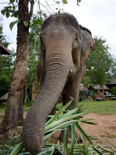 elephant cuisine thextrasuitcase one from the list an