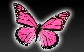 Real Pink Butterflies ...