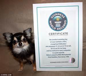 Tiny dog, big honour: Chihuahua earns a place in the ...