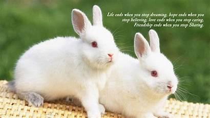 Bunnies Wallpapers Bunny Names Wallpapercave