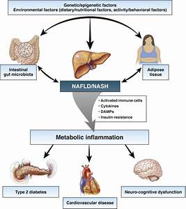 Metabolic Inflammation U2014a Role For Hepatic Inflammatory
