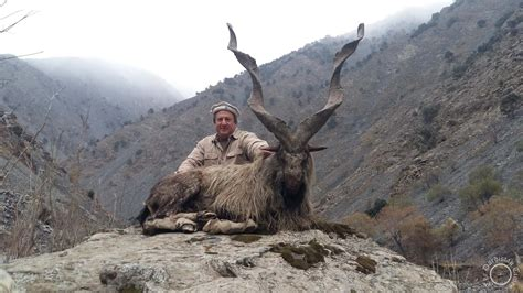 fred rich texas hunting markhor chitral