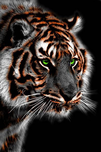 Tiger Saber Tooth Wallpapers Iphone Spirit Backgrounds