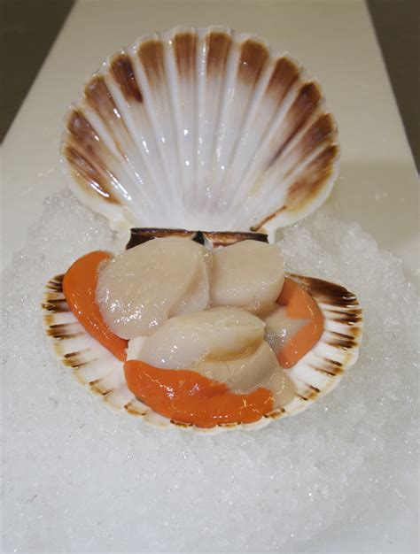 what are scallops scallop related keywords scallop long tail keywords keywordsking