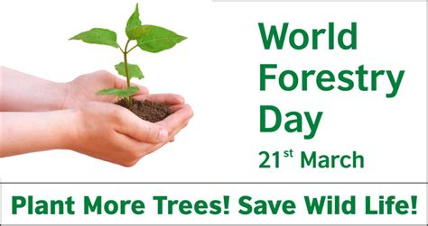 international day  forests  national